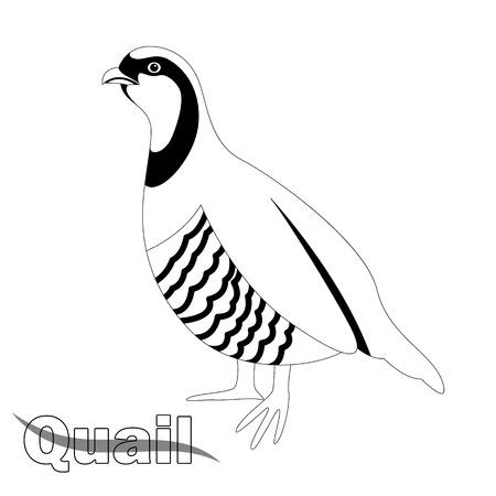 ptak przepiórki, ilustracja wektorowa, widok profilu, rysowanie podszewki