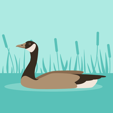 canada Goose on water,  vector illustration ,  flat style