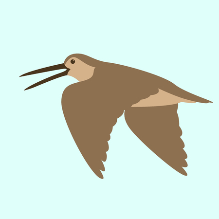woodcock in flight , vector illustration , flat style