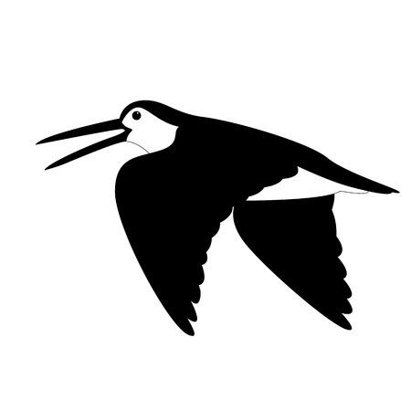woodcock in flight , vector illustration , black - white draw