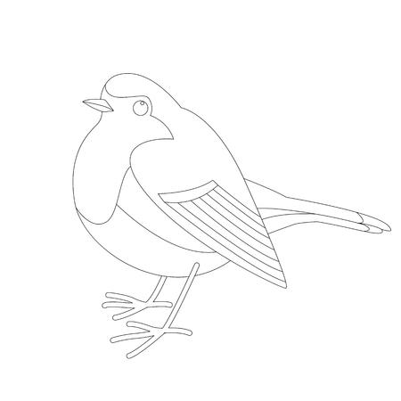 robin bird , vector illustration  ,lining draw