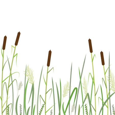 Canna e sfondo di erba verde, illustrazione vettoriale