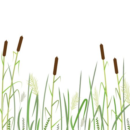 Reed and green grass background ,vector illustration