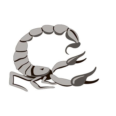 Scorpio vector illustration,flat style ,profile side
