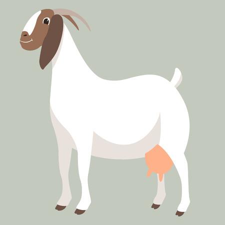 boer goat , vector illustration , flat style ,profile view Illustration