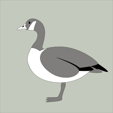 canadian goose, vector illustration , flat style ,profile
