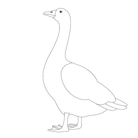 goose  vector illustration ,  lining draw  , profile view Ilustração