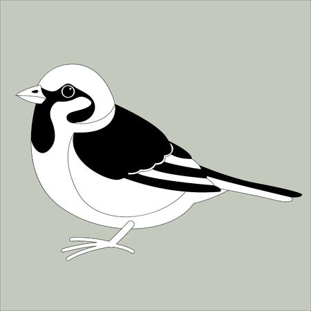 pájaro gorrión, ilustración vectorial, dibujo de revestimiento, vista de perfil
