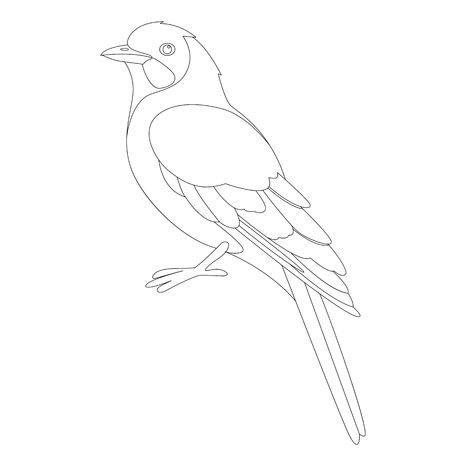 jay bird, vector illustration ,  lining draw, profile view