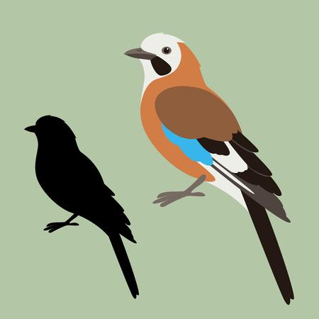 jay bird, vector illustration , flat style ,black  silhouette Illustration