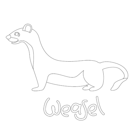 weasel vector illustration,  linig draw  ,profile view