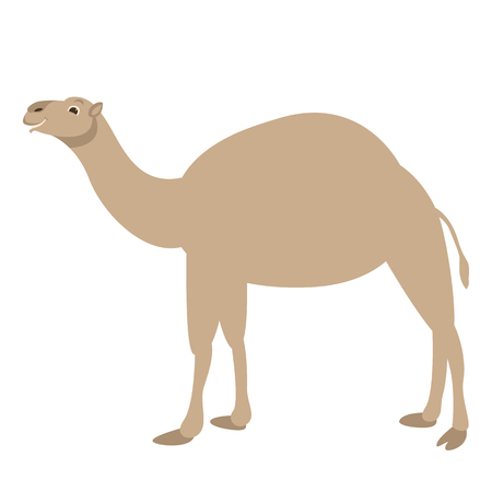 camel vector illustration, flat style ,profile side Illustration