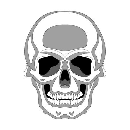 skull human,vector illustration , lining draw, front side Illustration