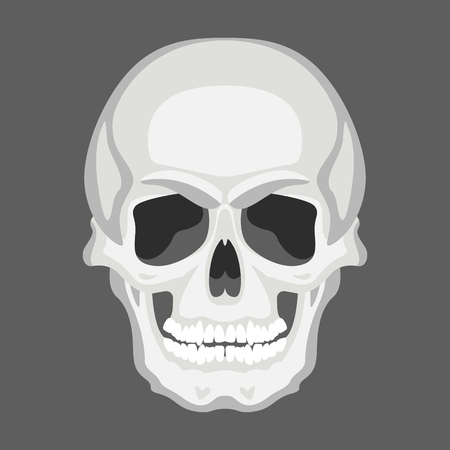 skull human,vector illustration ,flat style, front side
