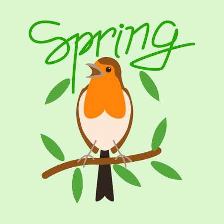 robin bird  , vector illustration, flat style,  front view