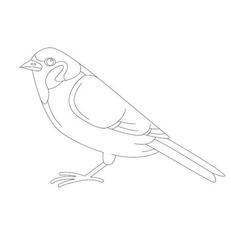 bird sparrow, vector illustration, lining draw,  profile view Illustration