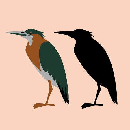set green heron, vector illustration, flat style, profile view Иллюстрация