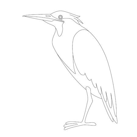 green heron,vector illustration, lining draw, profile view