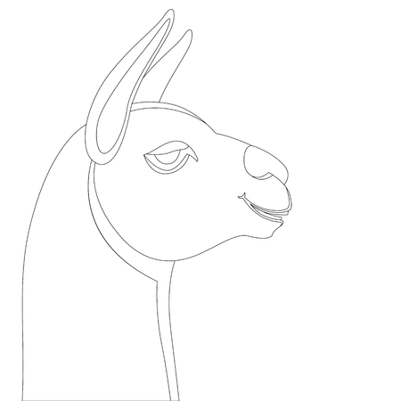 lama head, vector illustration, lining draw, profile side