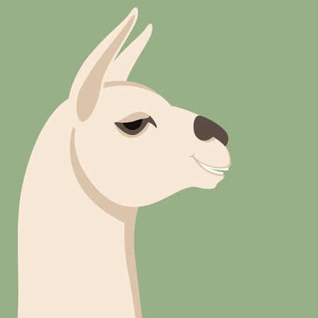 lama head, vector illustration,flat style, profile side  イラスト・ベクター素材