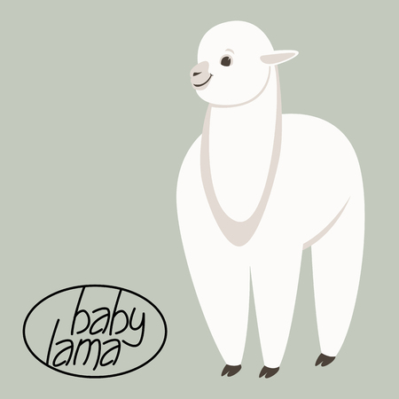 baby lama, vector illustration,flat style,front side  イラスト・ベクター素材