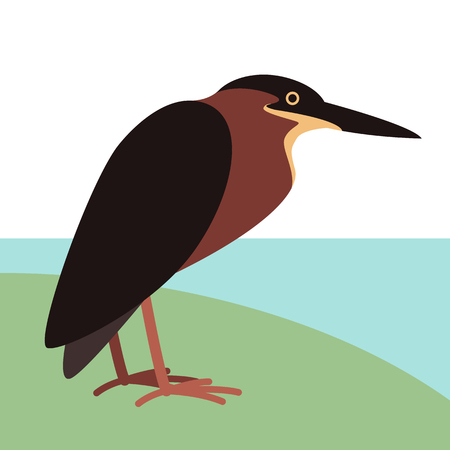green heron,  vector illustration,profile side,flat  イラスト・ベクター素材