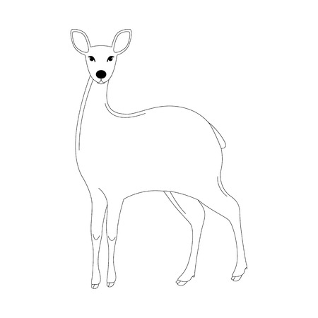 antelope , vector illustration, lining draw,front side  イラスト・ベクター素材