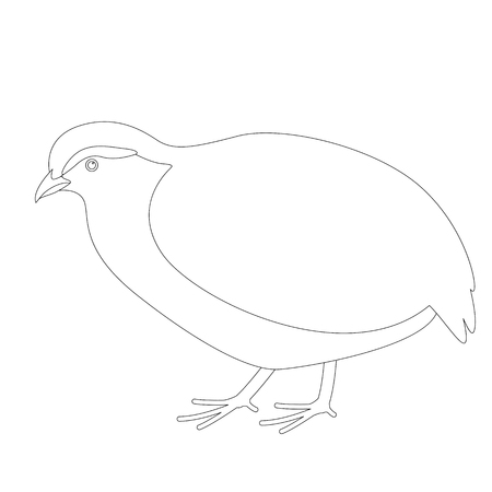 partridge,  vector illustration, lining draw ,profile view  イラスト・ベクター素材