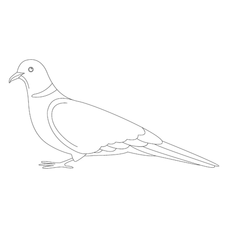 turtledove, vector illustration, lining draw ,profile view  イラスト・ベクター素材