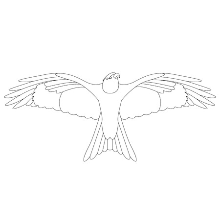 eagle hawk .vector illustration,lining draw , front view  イラスト・ベクター素材