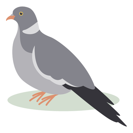 turtledove, vector illustration, flat style ,profile view