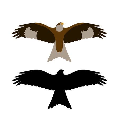 eagle hawk .vector illustration, flat style , front view