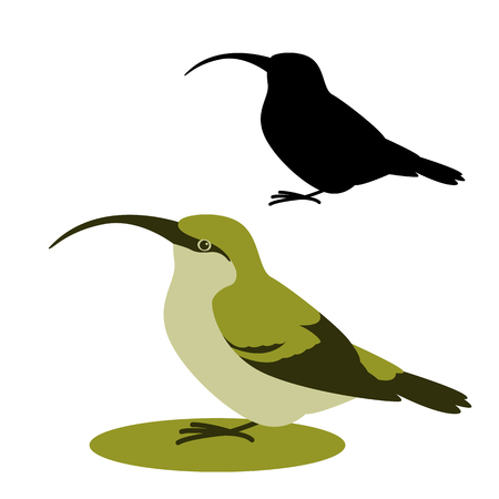 bird Oahu Akialoa, vector illustration,flat style,black silhouette