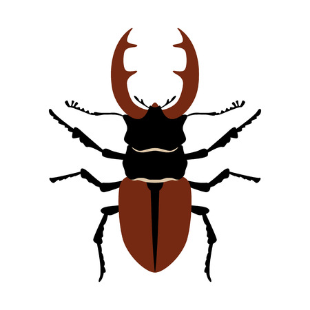 stag beetle, vector illustration,flat style ,front view