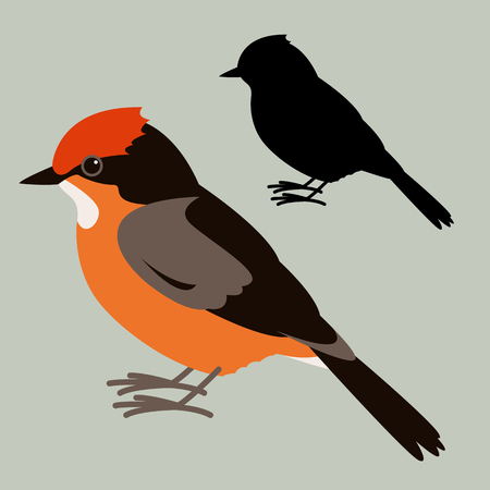 Vermilion Flycatcher, vector illustration,flat style,black silhouette set