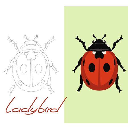 ladybird vector illustration  flat style, lining draw,set Illustration