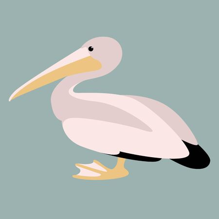 pelican vector illustration,flat style ,profile view