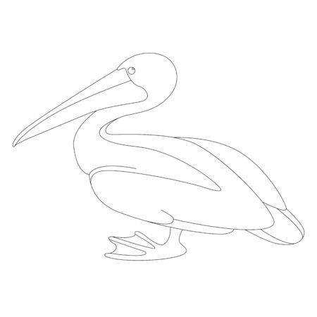 pelican vector illustration, lining draw ,profile view ,coloring 일러스트