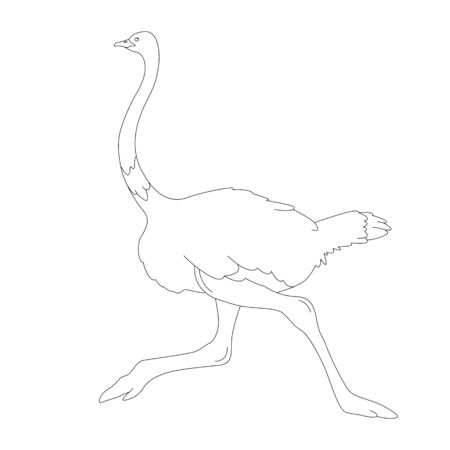 ostrich  bird, vector illustration,  lining draw , profile side