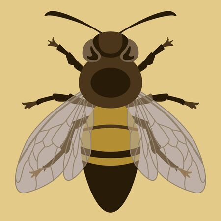 bee insect, vector illustration, front side, flat style