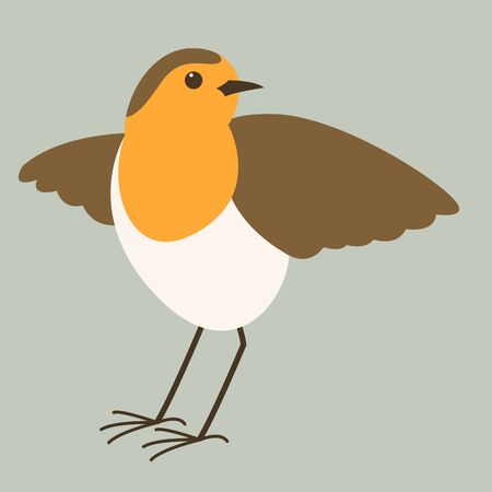 robin bird, vector illustration, flat style, front view
