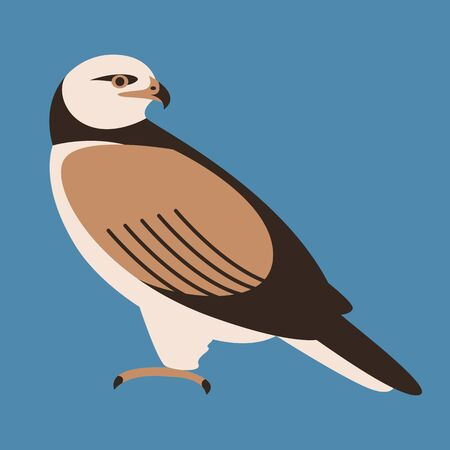 bird hawk ,  vector illustration,flat style,  profile side