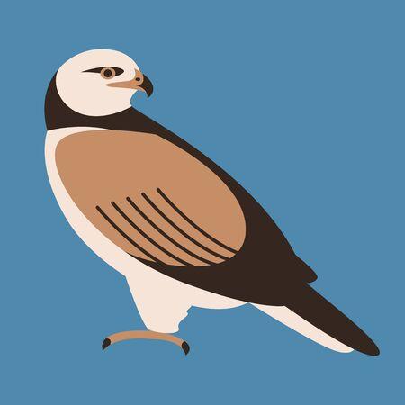 bird hawk ,  vector illustration,flat style,  profile side Zdjęcie Seryjne - 141182979