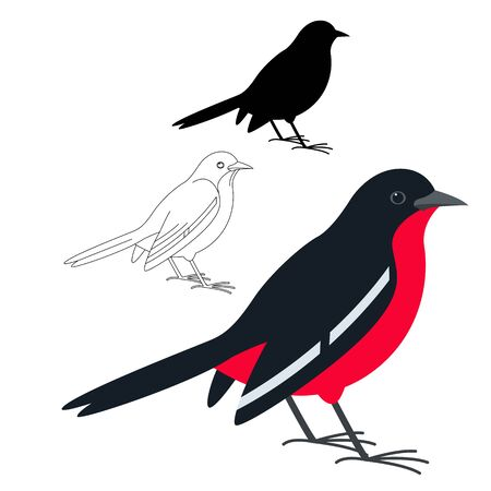 breasted shrike,vector illustration, flat style, silhouette and lining draw
