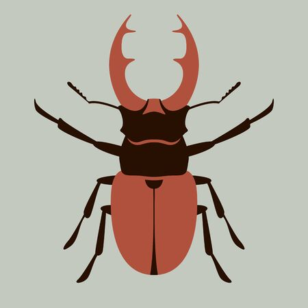 deer beetle, vector illustration, flat style ,front side 일러스트