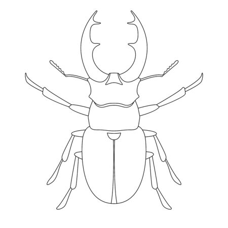 deer beetle, vector illustration,  lining draw ,front side