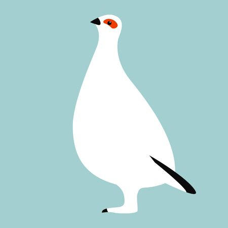 white partridge bird, vector illustration, flat style, profile