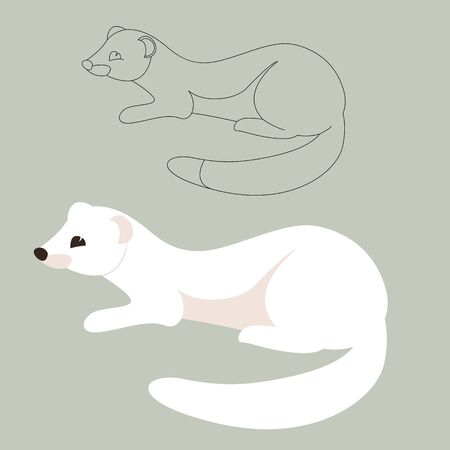 white weasel , vector illustration, flat style, lining draw