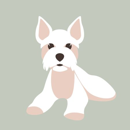 Maltese dog, vector illustration, flat style, front view 스톡 콘텐츠 - 145910014