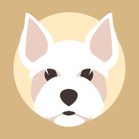 Maltese head  dog, vector illustration, flat style, front view Illustration